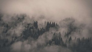 fog-forest-nature-640-9331-cool-1024x576