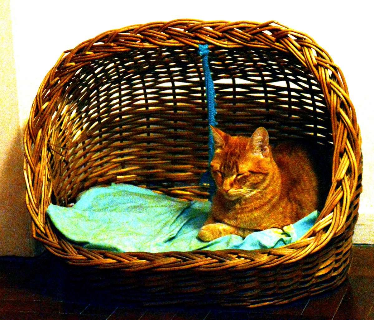 Jodos's Cat