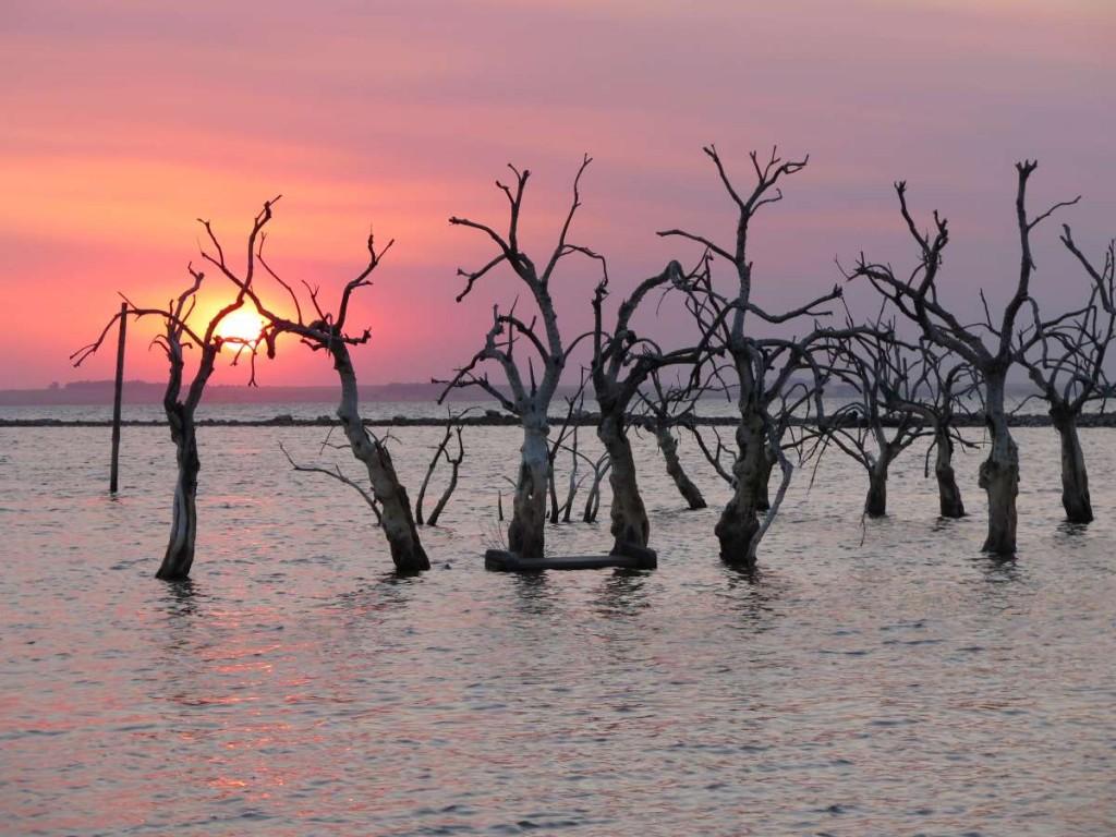los árboles con sus dedos atrapan el sol. Patricia C. Bonjour