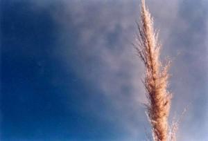 Camino al cielo. EDO