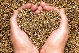 manos corazon con semillas