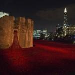 foto de la torre de Londres amapolas rojos