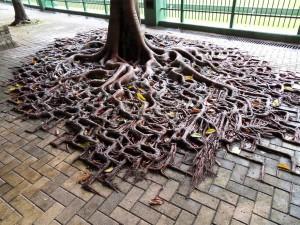 raices creciendo en aceras cemento asfalto