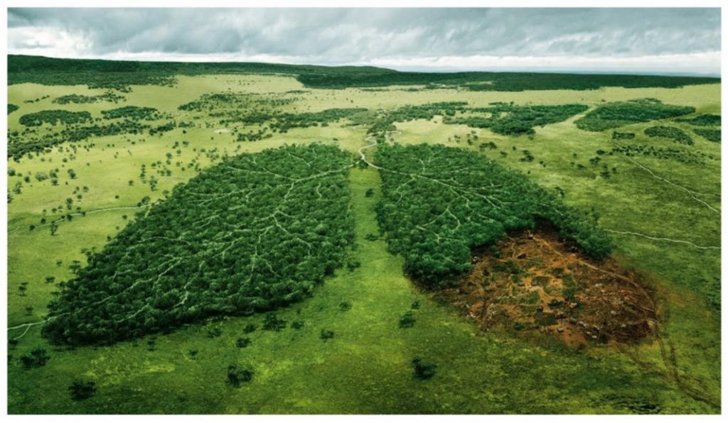 Foto 5 - Deforestación