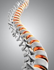 columna-vertebral-3d_1048-4916