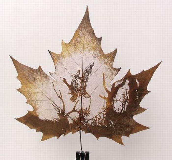 Dibujos sobre hojas secas.