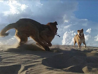 Perros y Sombras, foto de Bernardino Ávila